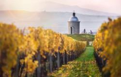 Czechy winem płynące
