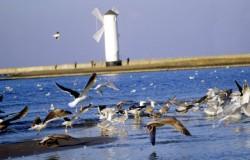 Może jesienią nad polskie morze?