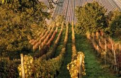 Tradycje winiarskie na Morawach