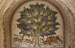 Sykomora – odkrywamy biblijnego figowca