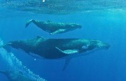 Turyści przybyli obserwować wieloryby