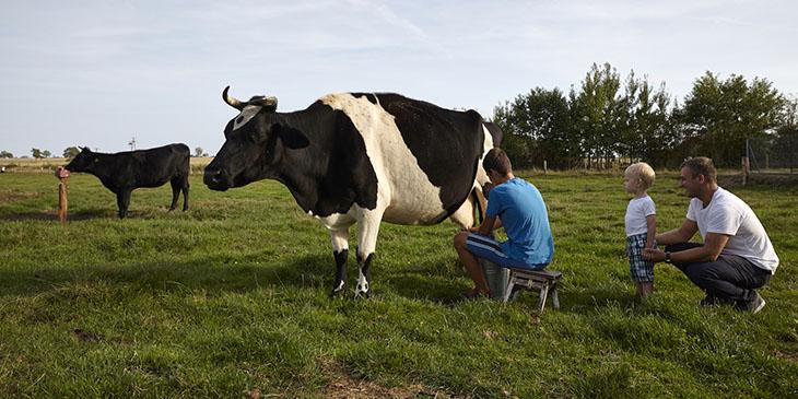 W agroturystyce Ola można uczestniczyć w codziennych pracach gospodarstwa (foto: Konrad Królikowski)