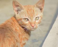 Brytyjski turysta zmarł na skutek wścieklizny po ugryzieniu przez kota