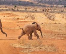 Barack Obama o turystycznych szansach Afryki