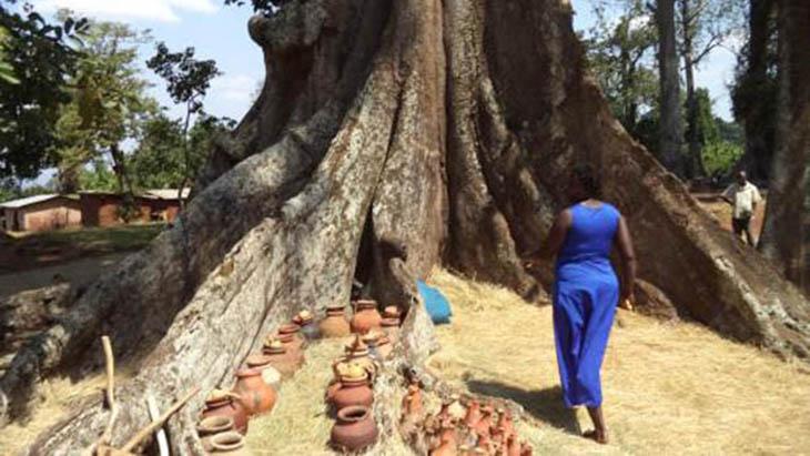 Nakayima Tree / www.mubende.go.ug