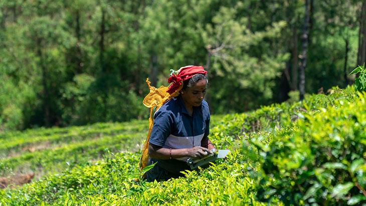 Sri Lanka – poznaj herbaciany raj na ziemi