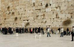 Lisy w Jerozolimie – proroctwo pod Ścianą Płaczu