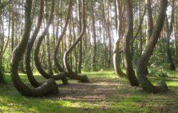 Polski las wyróżniony przez brytyjski dziennik
