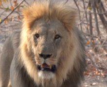 Czekając na bezpieczne wakacje: Afryka z kanapy