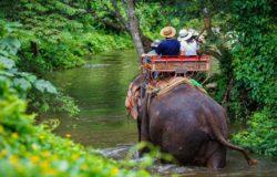 Brak turystów poprawił sytuację słoni