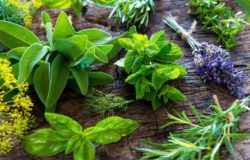 Dziko rosnące zioła podnoszą naturalną odporność organizmu. Powrót do natury