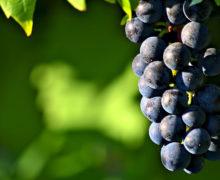 Wina made in Poland. Z pasji wyjątkowych ludzi