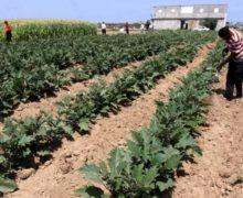 Francja wspiera wysiłki gospodarcze Palestyny