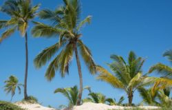 Dominikana wymaga negatywnego wyniku testu od wszystkich podróżujących