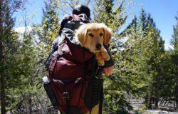 Kolejna linia lotnicza zakazuje podróży z psem