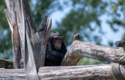 """Tanzania: odkrycia """"pani od szympansów"""""""