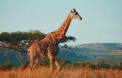 RPA ponownie otwiera się dla turystów
