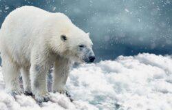 Topnieją lodowce Arktyki