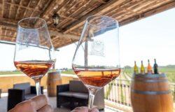 Wino na Malcie – co warto wiedzieć i czego spróbować