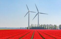 Holandia ogłasza częściowy lockdown