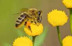 Dostawca energii wybudował hotel dla pszczół