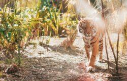 Air Canada zwalcza nielegalny handel dzikimi zwierzętami