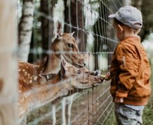 Londyńskie zoo ponownie otwarte na święta