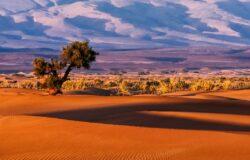 Marokański paszport pozwala na wjazd do 64 krajów