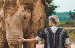 Tajlandia: słonie głodują z powodu braku turystów