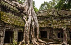 Kambodża pozwoli wejść do Angkor Wat zaszczepionym turystom?