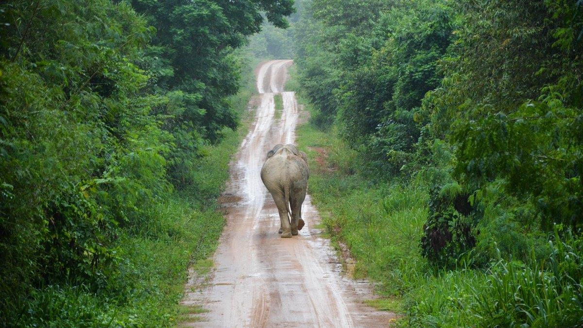 Słoń na drodze w Tajlandii