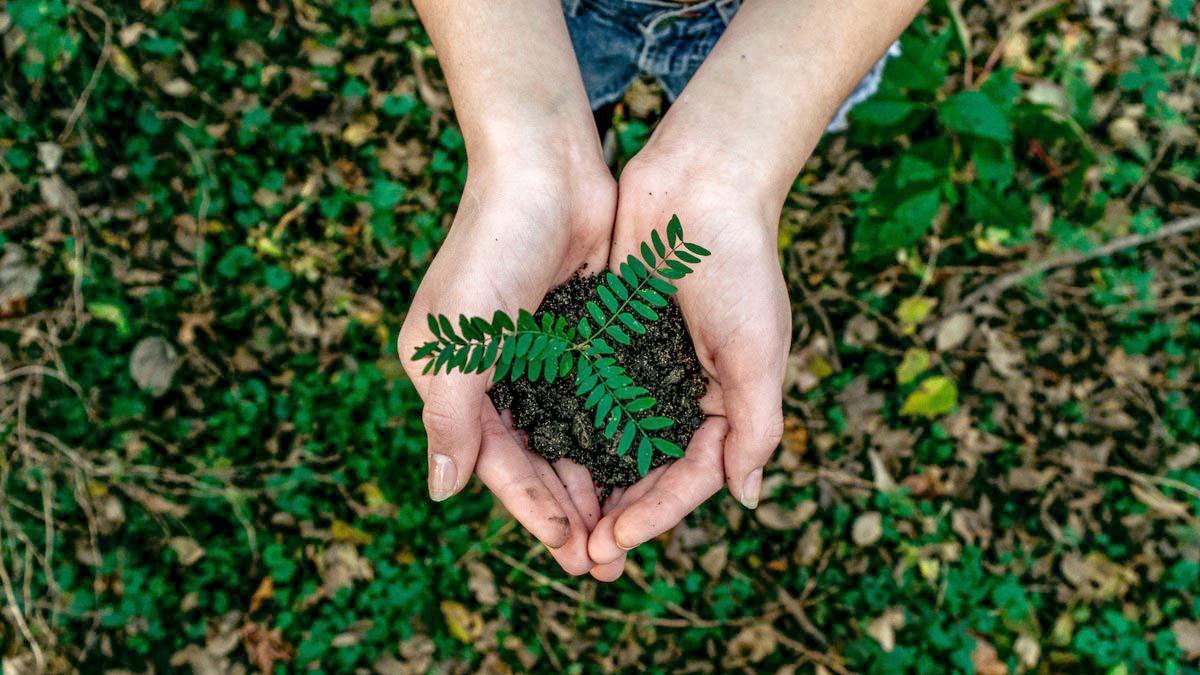 Kobieta z rośliną w rękach