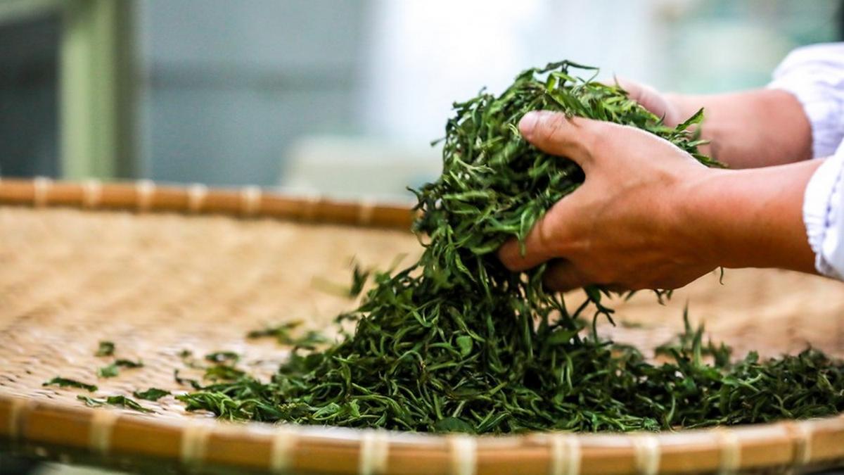 Herbata z Guizhou
