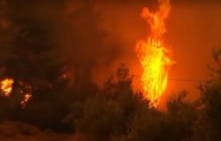 Pożary niszczą greckie wyspy. Mieszkańcy i turyści ewakuowani z Evii